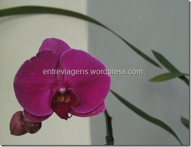 Jardim Botânico 2012 149_thumb[4]