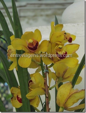 Jardim Botânico 2012 150_thumb[4]