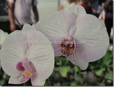 Jardim Botânico 2012 155_thumb[4]