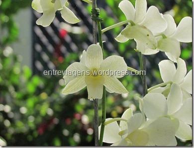 Jardim Botânico 2012 168_thumb[4]