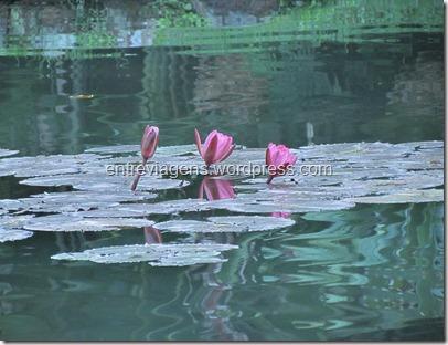 Jardim Botânico 2012 233