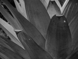 Experiências em preto e branco: detalhe de uma bromélia.