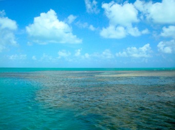Os arrecifes de Picãozinho.