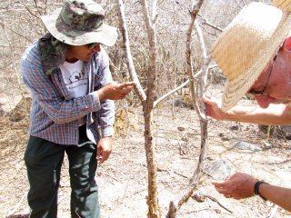O guia Rômulo explicando as propriedades da planta.