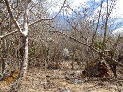 A paisagem do Cariri.